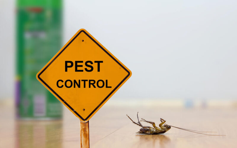 What To Do When Your Home is Infested with Pests?